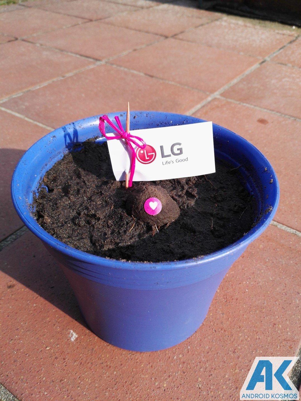 """LG """"Life's Good"""" engagiert sich für den Umweltschutz und wir pflanzen die Saat 10"""