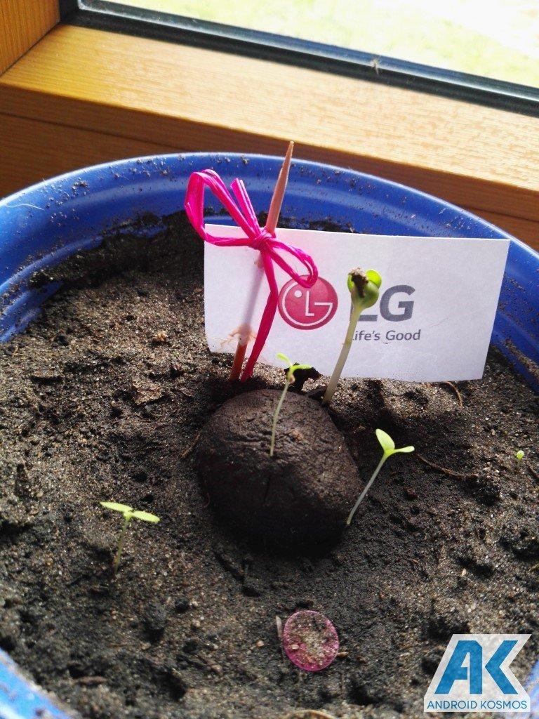 """LG """"Life's Good"""" engagiert sich für den Umweltschutz und wir pflanzen die Saat 13"""