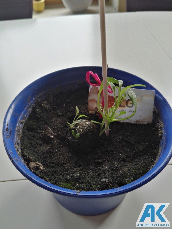 """LG """"Life's Good"""" engagiert sich für den Umweltschutz und wir pflanzen die Saat 27"""