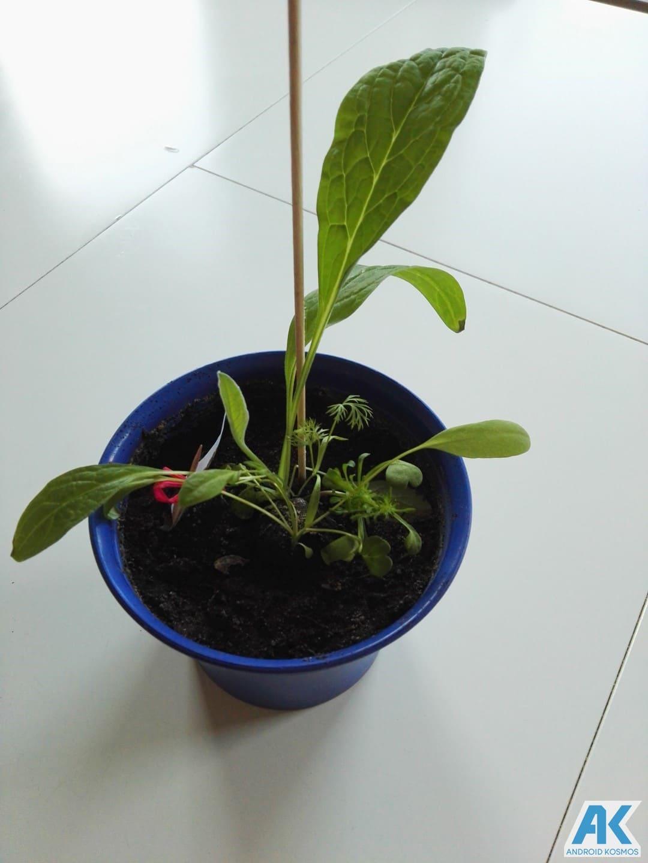 """LG """"Life's Good"""" engagiert sich für den Umweltschutz und wir pflanzen die Saat 1"""