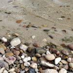 OnePlus 5 Test: solides Flaggschiff Smartphone aber nicht mehr günstig 29