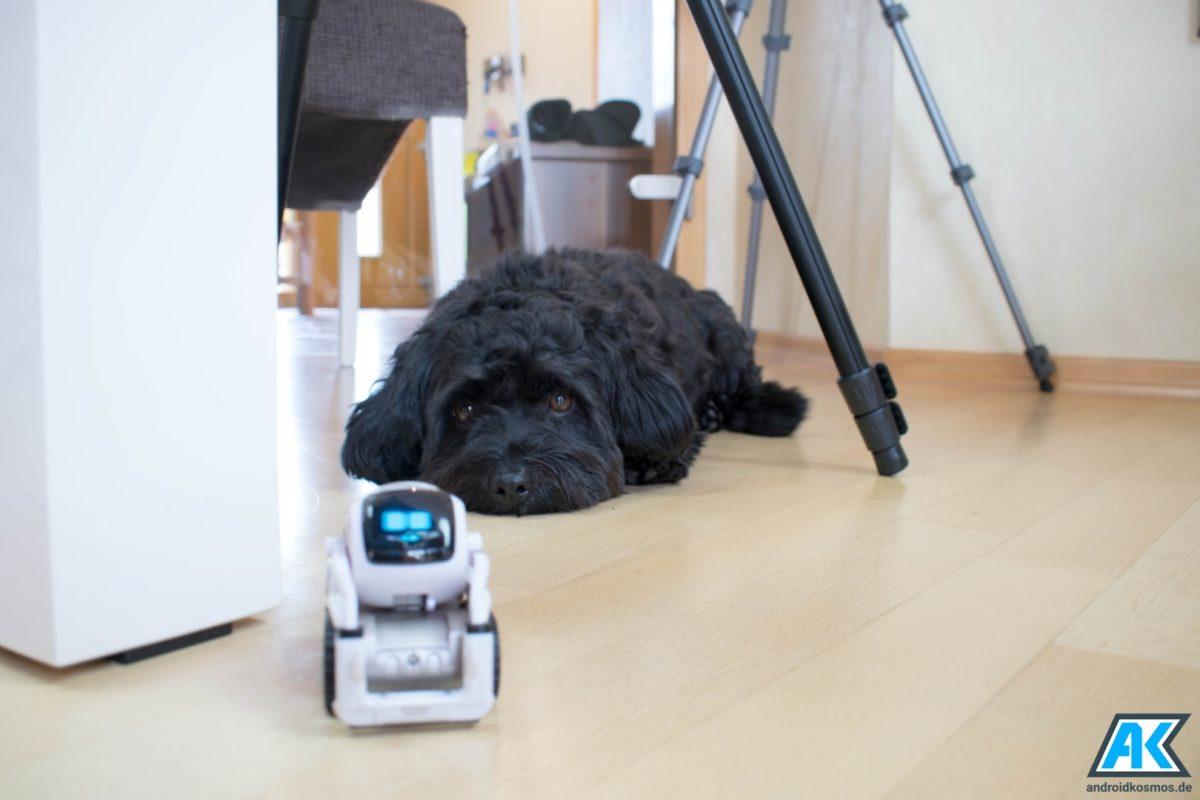Anki Cozmo Test: Der knuffige Spielzeugroboter mit eigener KI 58
