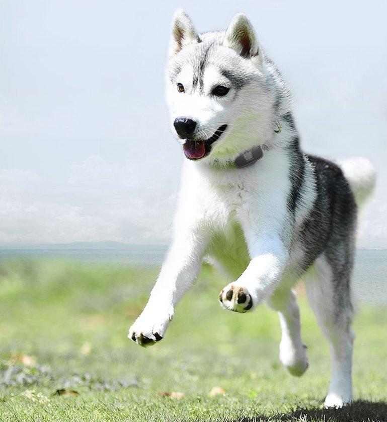 Mi Pet Tracker Dog