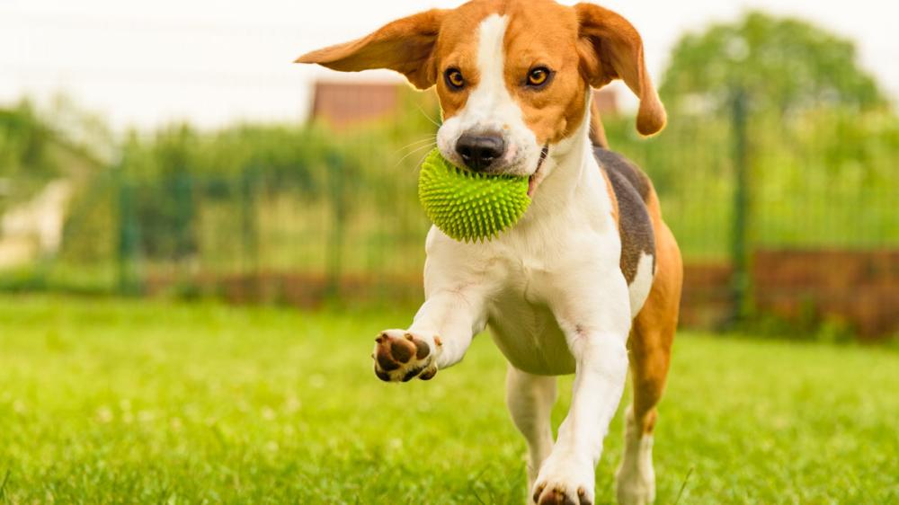Corona Quarantäne Mit Hund